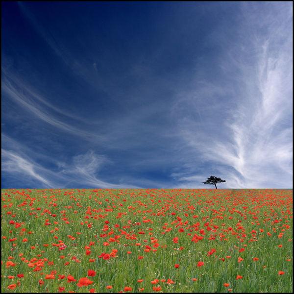 poppys kts way