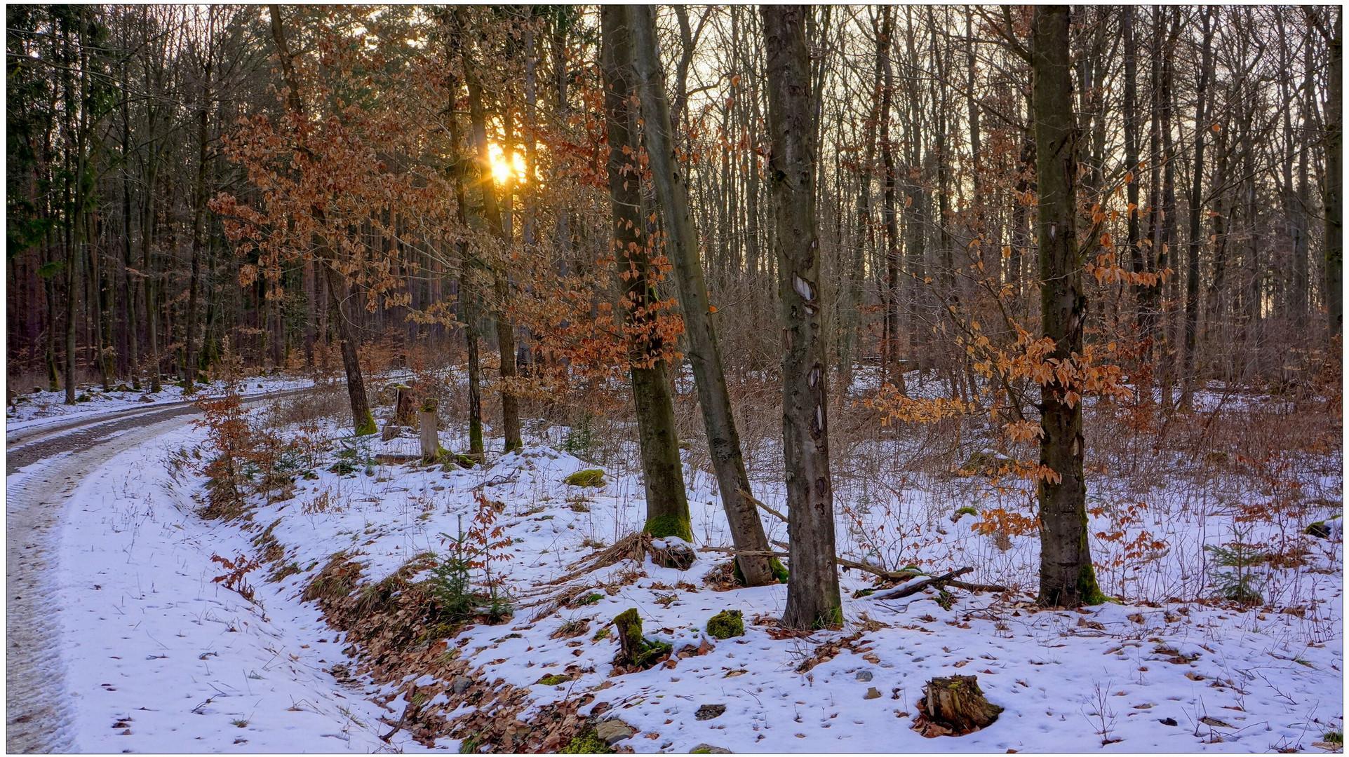 por la tarde en el bosque III (abends im Wald III)