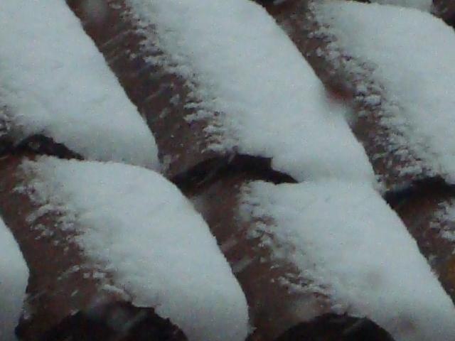 Porfin nieva