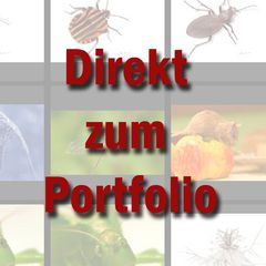 Portfolio Ravensburg
