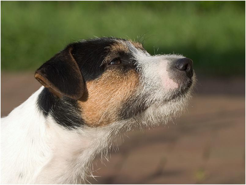 Porträt Archie