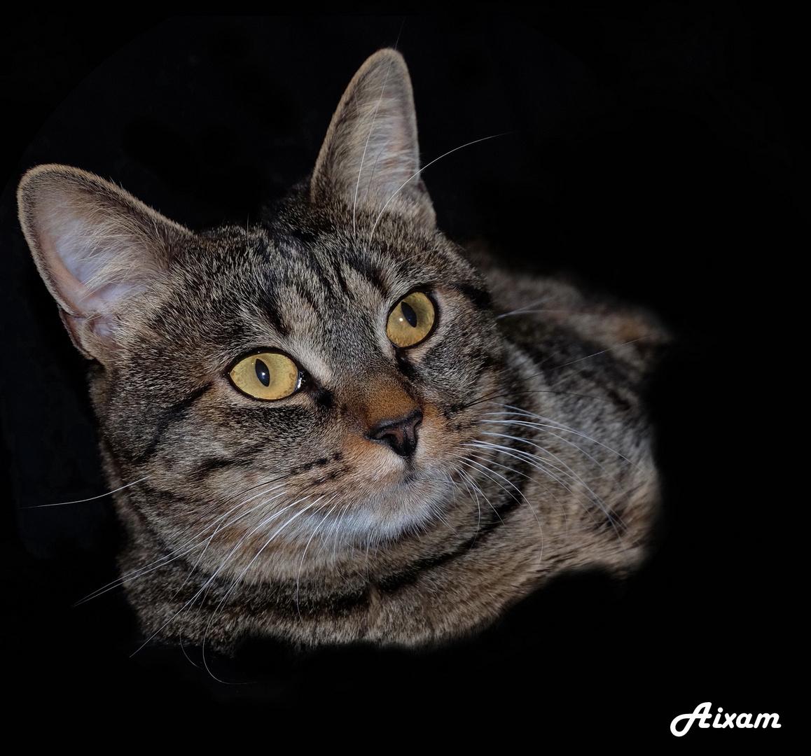Portrait d' Aixam