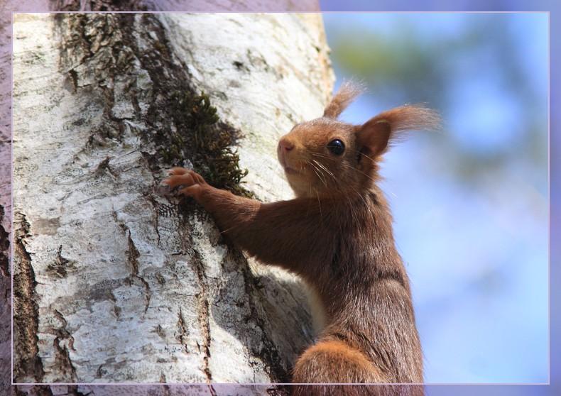 portrait d'ecureuil
