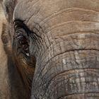 portrait d'éléphant