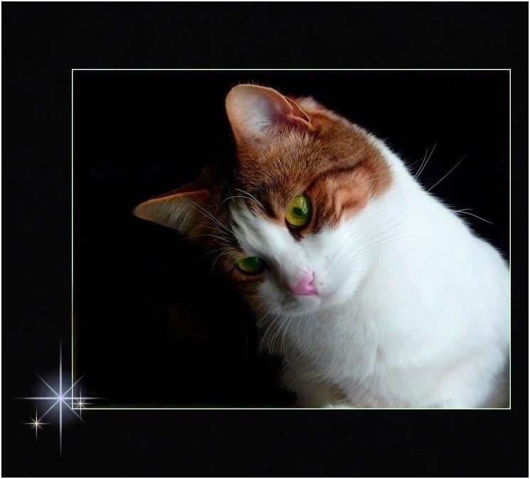 * portrait du chat *