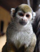Portrait d'un singe