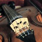 Portrait einer Geige