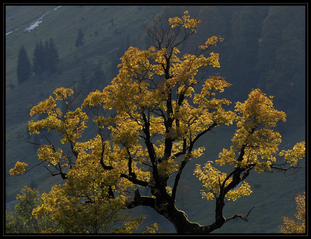 Portrait eines Baumes
