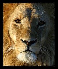Portrait eines Königs [reloaded]