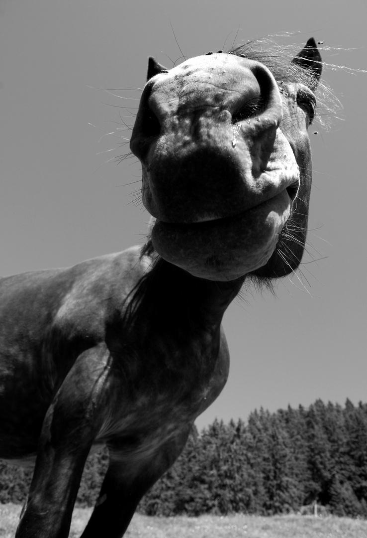Portrait eines Pferdes