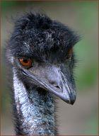 Portrait Emu