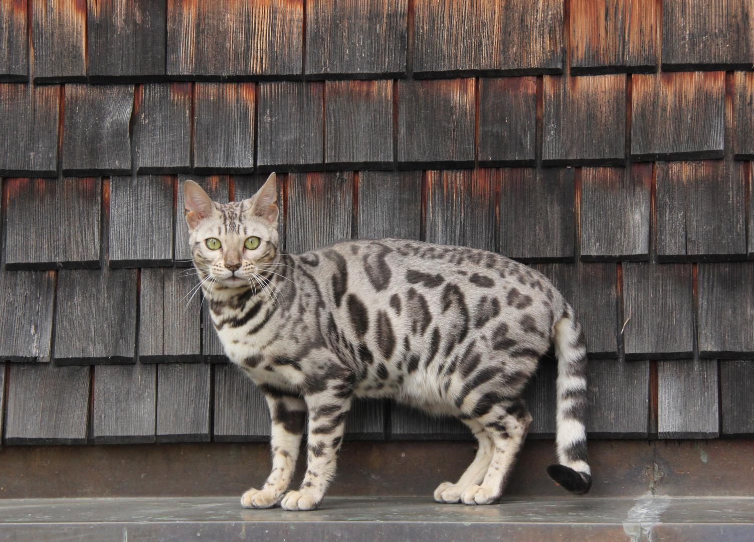 Portrait für die Katz