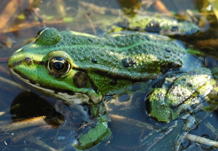 Portrait im Froschauge