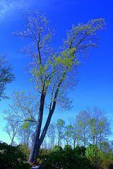 portrait of a tree...