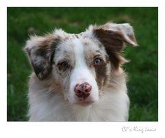 Portrait von Louie
