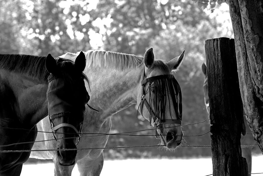 Portrait von Pferden