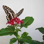 Posé sur une fleur