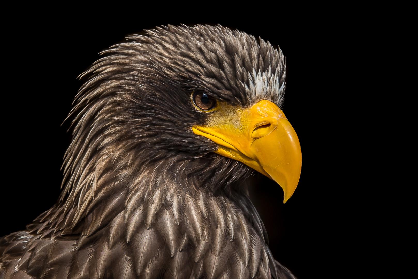 posing eagle