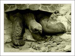 """posing turtle :-)"""
