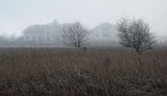 Potsdam- wunderschöner Nebeltag -