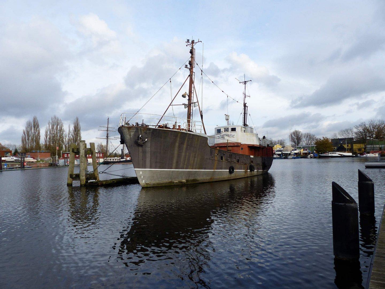 Pottwal im Harburger Hafen!