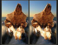 Pottwal von achtern! [3D ] ______________________________________ Pottwal von achtern! [ 3D]