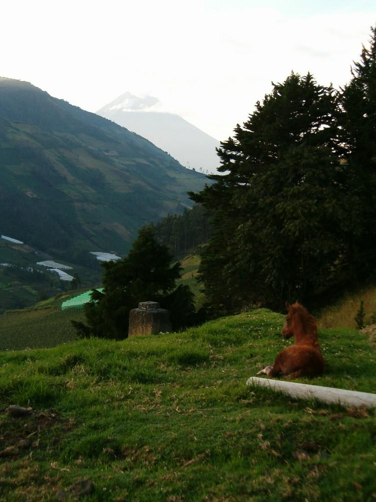 poulain et volcan (4000 mètres)