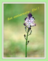 Pour Elvi ......