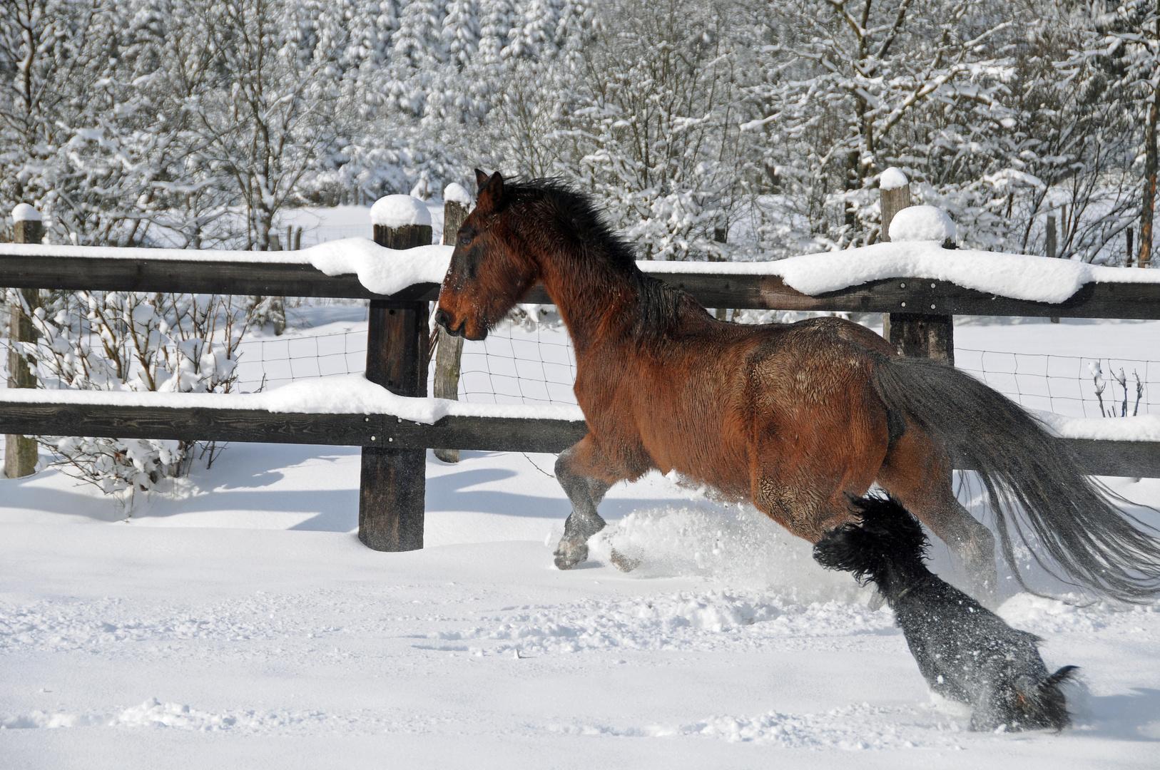 poursuite ds la neige