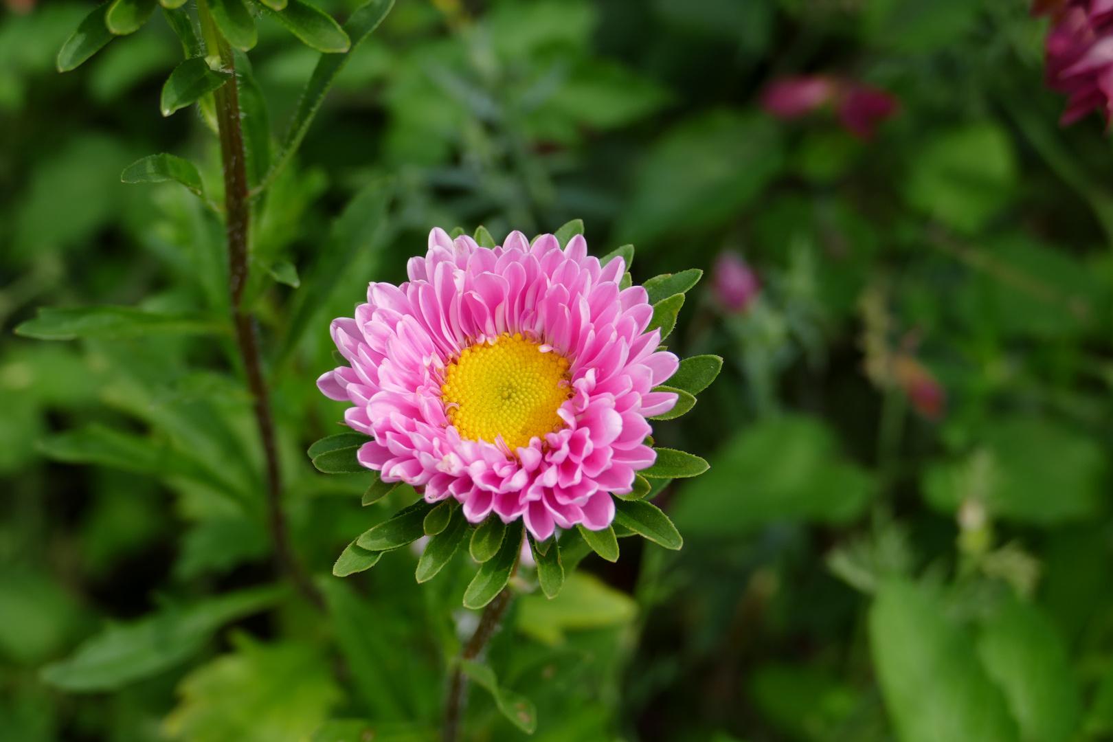 Power as Flower