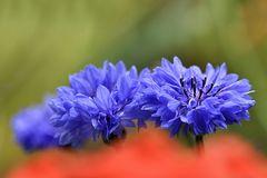 Power Blau