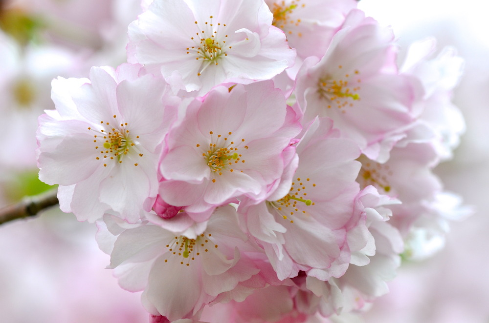 * Power-Blüten *