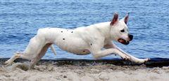 Power Dog 3