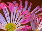 ~power flower~