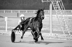 - Power horses Horse power -