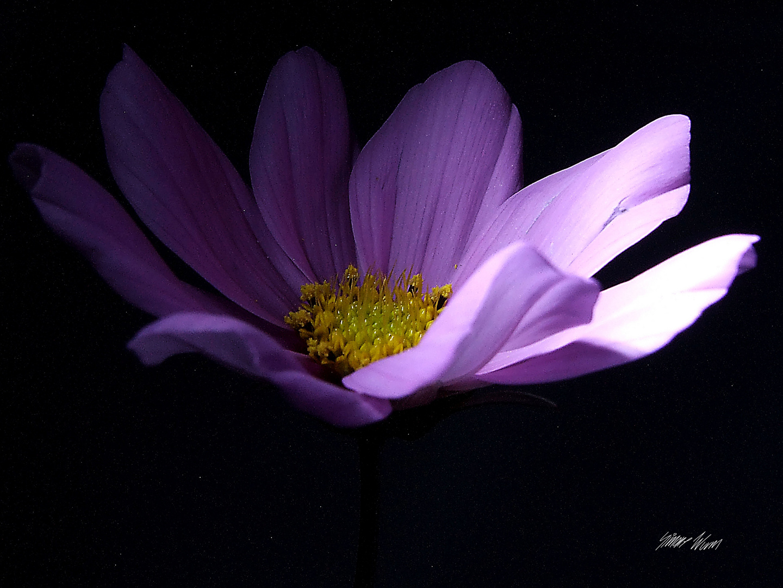 Power of a Flower
