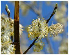 Power of Springtime