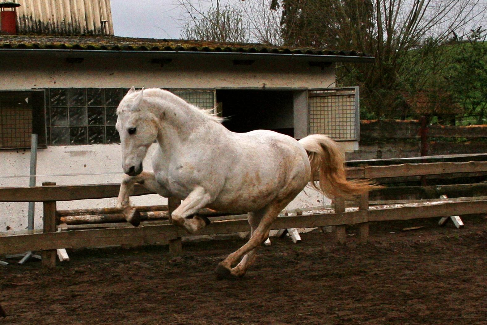 Power Pony :D