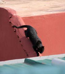 PP street Katze-3- Maroc ca-21-0018-col