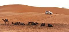 PP Wüste 8 Kamele sunset Maroc-83col