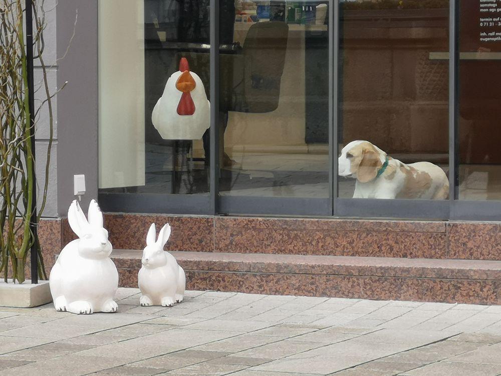 PP_street Hund und Hase RT p20-12-col