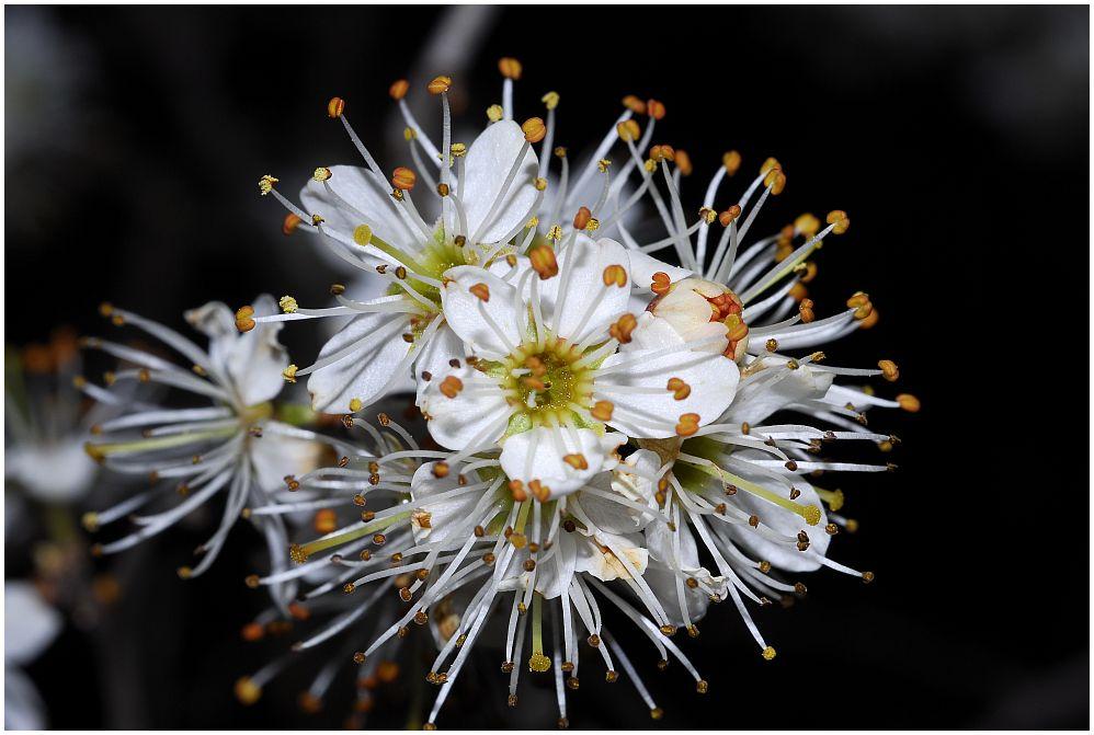 Pracht in Blüten