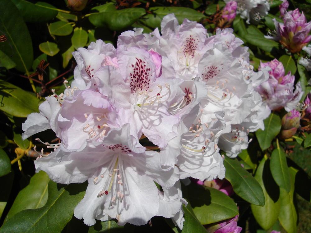 Prachtblüten
