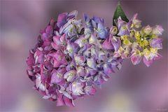 Prachtvoll und mehrfarbig ...