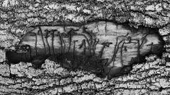 Prähistorische Schriftzeichen