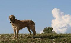 Prärie-hund.....