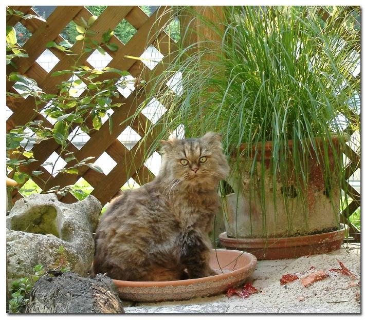praktische Gartentips