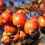 Pralle Äpfelchen im Winter