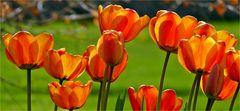 Pralle Blüten,