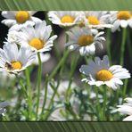 Prati in fiore